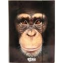 TECZKA Z GUMKĄ A4 -szympans