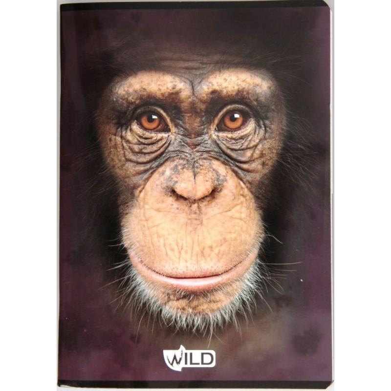 ZESZYT A5 / 60 kartek w kratkę szympans